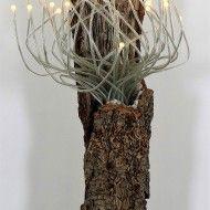 Minégétal Lampe